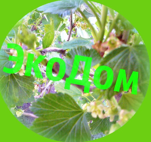 Экодом11